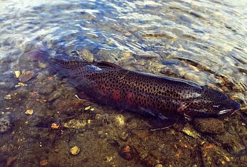 в какое время суток клюет рыба зимой