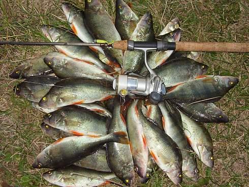 скачать торрент рыбалка на окуня - фото 8