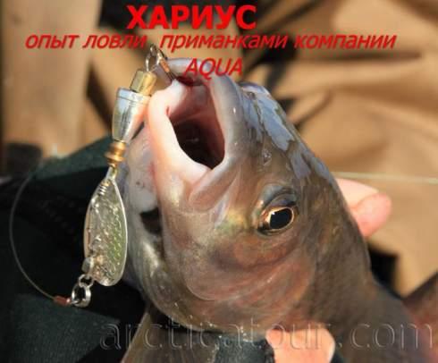 Рыбалка на хариуса. Опыт ловли на спиннинг